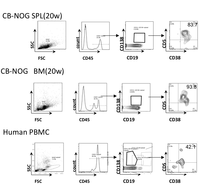 Antibody secreting plasma cells with unique cd5 supsupigg phenotype of cd138cd19 plasma cells in cb nog mice cb nog b cells obtained from spleen spl and bone marrow bm cells after 20 weeks of transplantation publicscrutiny Choice Image