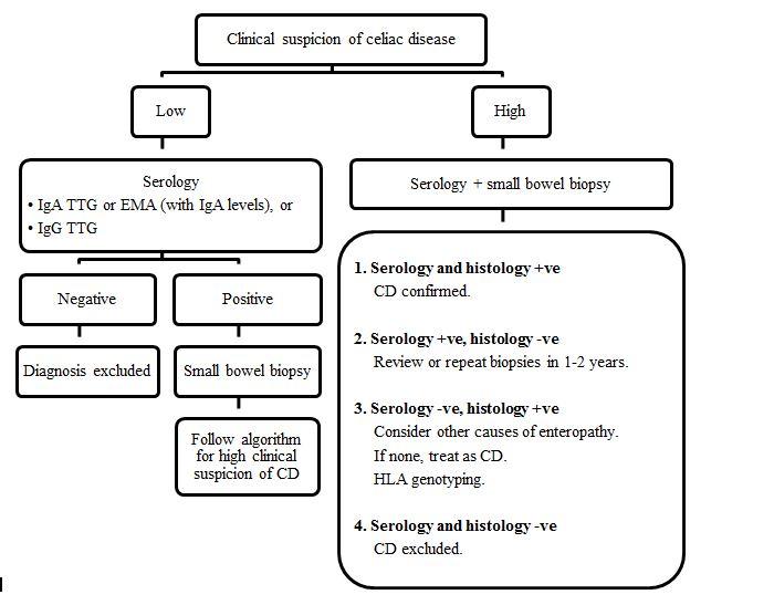 Figure 1. Algorithm for diagnosing celiac disease (IgA ...