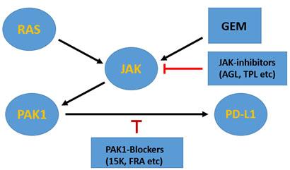 Breakthrough Pak1 Dependent Expression Of Pd L1 Programmed Death Ligand