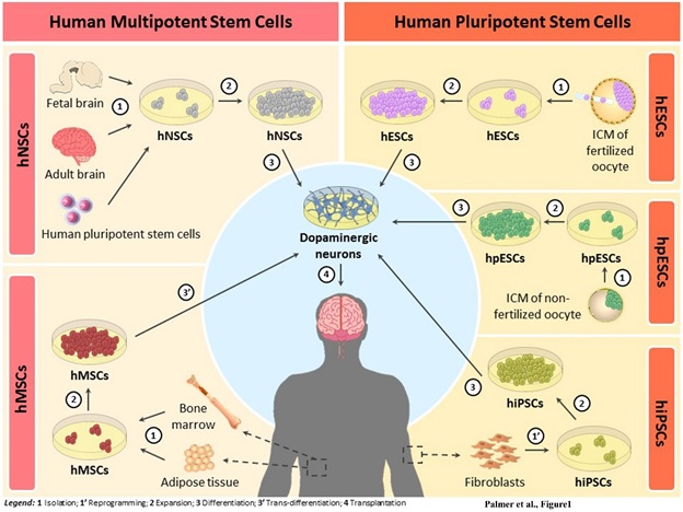 advantages disadvantages of stem cell research