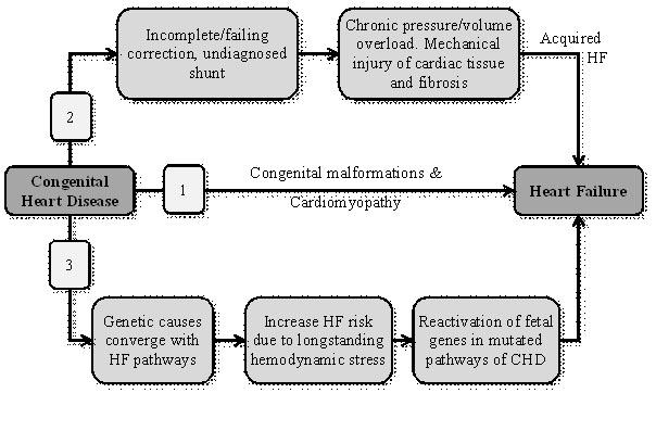 Heart failure in congenital heart disease: A review of