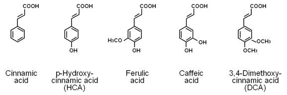 Figure 2 Chemical Structures Of Cinnamic Acid And Its Related Compounds The Molecular Weight P Hydroxycinnamic HCA Ferulic